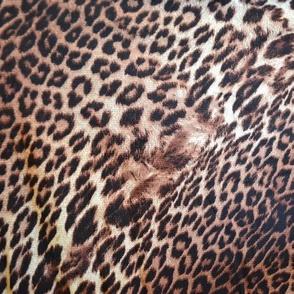 Exotic Leopard Print