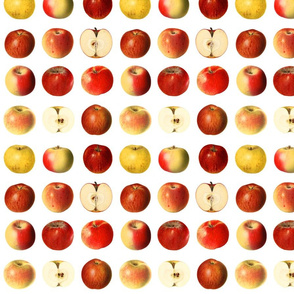 Yummy apples, red and yellow