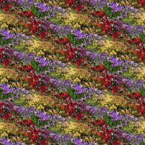 Flower Field | Photorealistic Multi Stripe