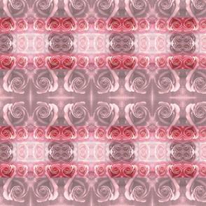 Roses Beige