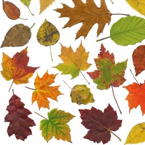 life-sized autumn leaves on white