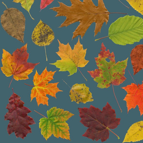 life-sized leaves on slate