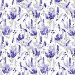 """3"""" Lavender Lavender Lavender"""