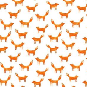 Foxes on white