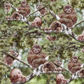 Happy sloths