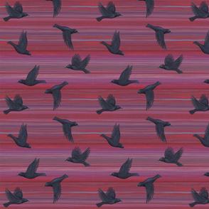 black crows fly on maroon red purple