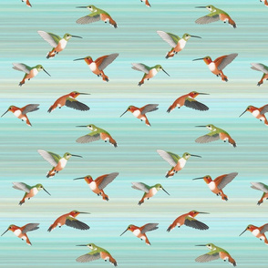 rufous hummingbirds on aqua