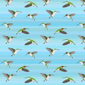 ruby throated hummingingbirds on aqua