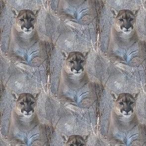 Purring Mountain Majesty | Seamless Mountain Lion Photo Print