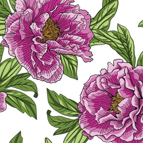 Pink Purple Peony Flowers with Green Leaves