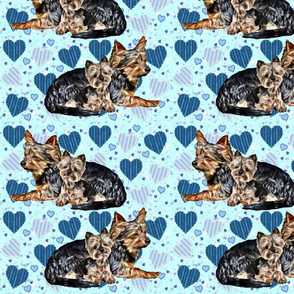 Yorkies and blue hearts