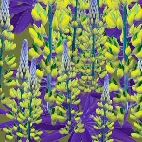 lupin yellow bluish purple