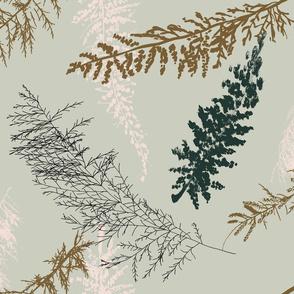 big fir branches