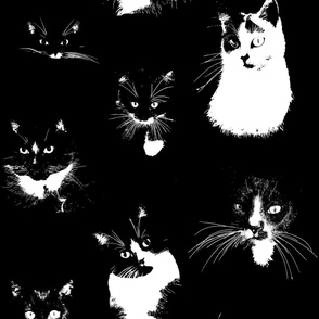 Large Black and White Cats
