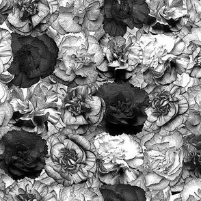 Carnations B&W