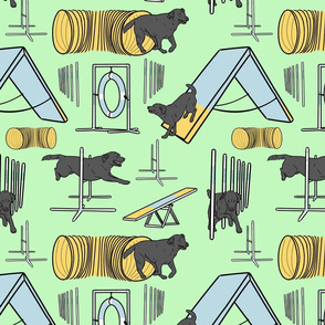 Simple black Labrador Retriever agility dogs - green