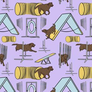 Simple chocolate Labrador Retriever agility dogs - purple