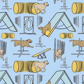 Simple yellow Labrador Retriever agility dogs - blue