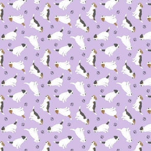 Tiny Jack Russell Terriers wire coat - purple