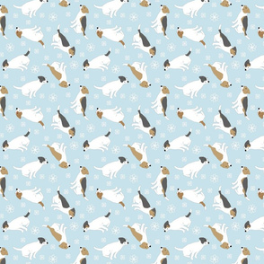 Tiny Jack Russell Terriers smooth coat - winter snowflakes