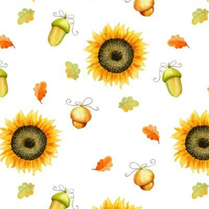 Sunflowers and acorns on white