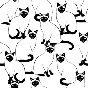 Siamese Cats Crowd Black and White