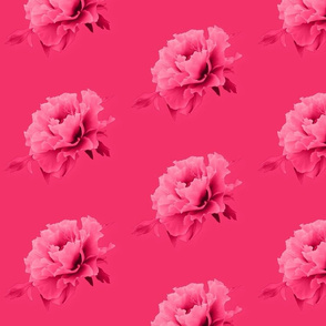 Peony in pink