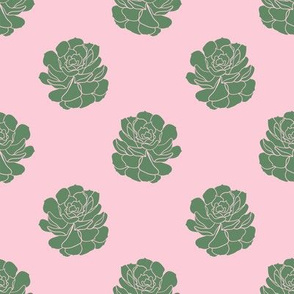 Succulents (Pink and Green)