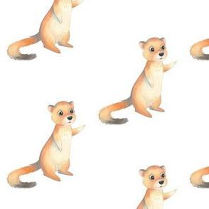 Woodland Weasel