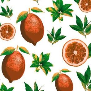 Lemon Love Orange on White