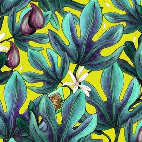 Figs 5