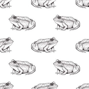 Frogs (White) / animal safari wildlife adventure kids room decor boys girls