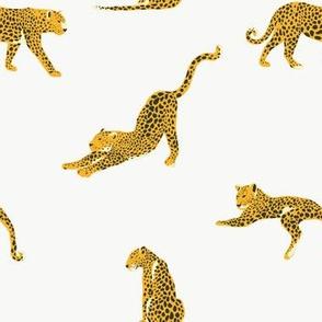 Leopard / Jungle Park