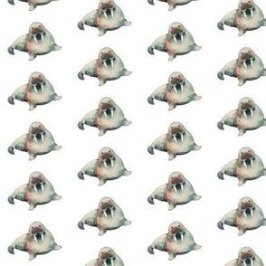 Walrus Pattern