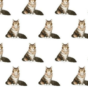 Maine Coon Cat Pattern