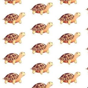Desert Tortoise Pattern
