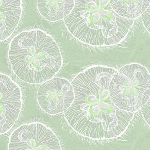 wavelet moon jellies