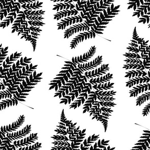 Fern leaves. Black on white