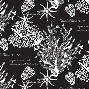 Black and White Coral