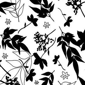 Black on White Foliage