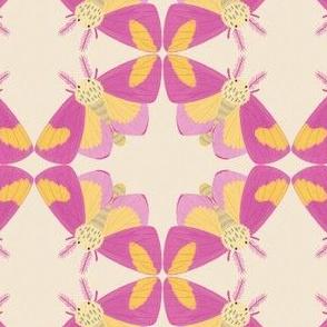 Rosy Maple Moth on Cream