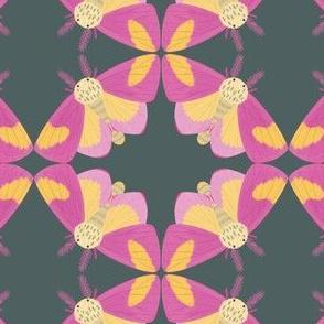 Rosy Maple Moth, Dark Grey