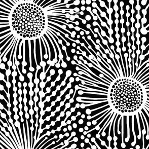 Coastal Banksia Flower in Black and White