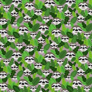 Peekaboo Sloths