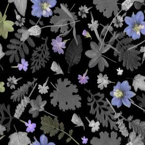 Blue larkspur dark floral