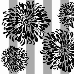 zinnia bk wht grey stripe