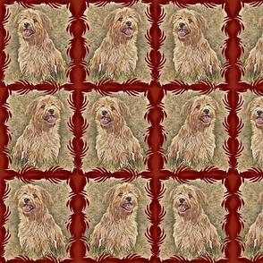 Norwich Terriers Frames