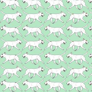 Trotting Miniature white Bull Terrier border - mint