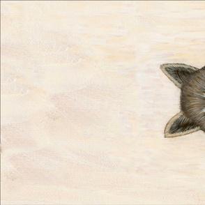SP Twill Soon Mr Raccoon