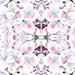 Hydrangea is it